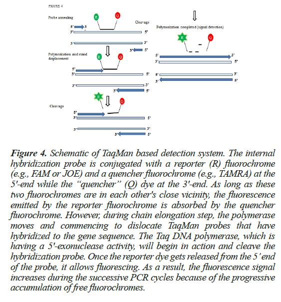 biochemistry-biotechnology-probes