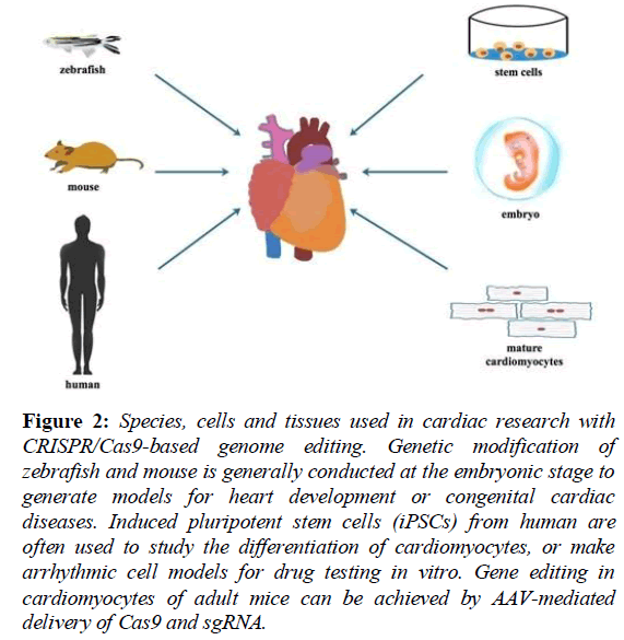 current-cardiology-tissues