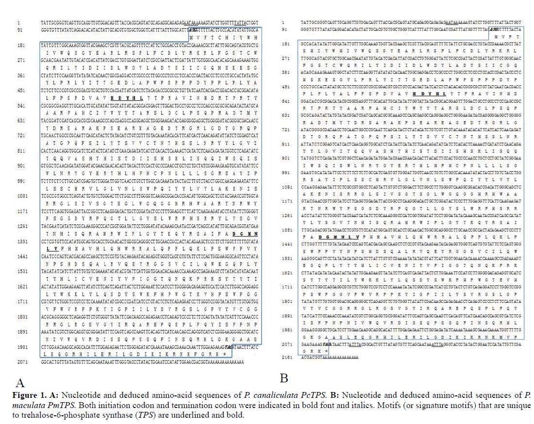Gene-Silencing-Nucleotide