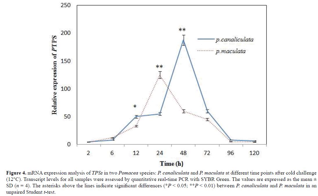 Gene-Silencing-SYBR-Green