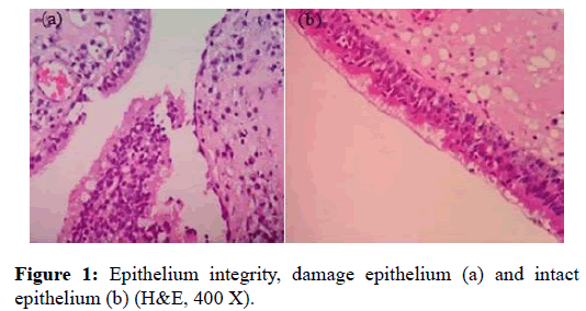Otolaryngology-Epithelium-integrity