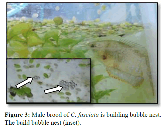 Pure-Applied-Zoology-Male-brood