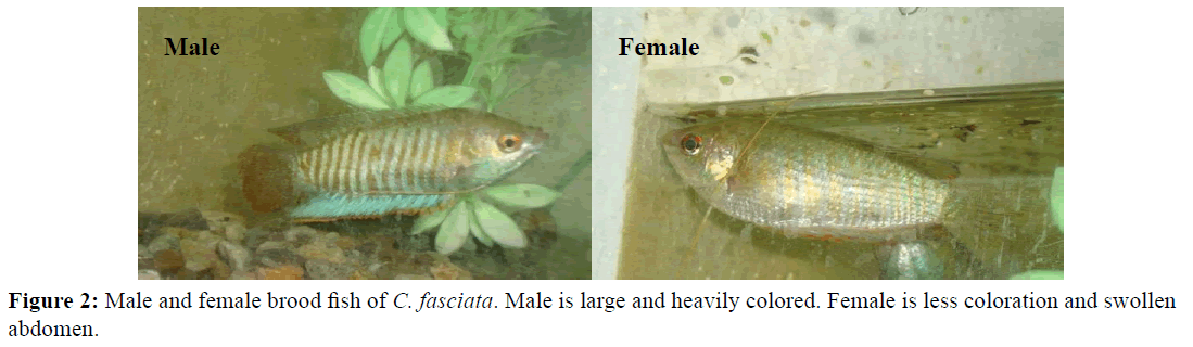 Pure-Applied-Zoology-Male-female