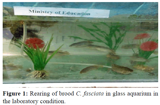 Pure-Applied-Zoology-Rearing-brood