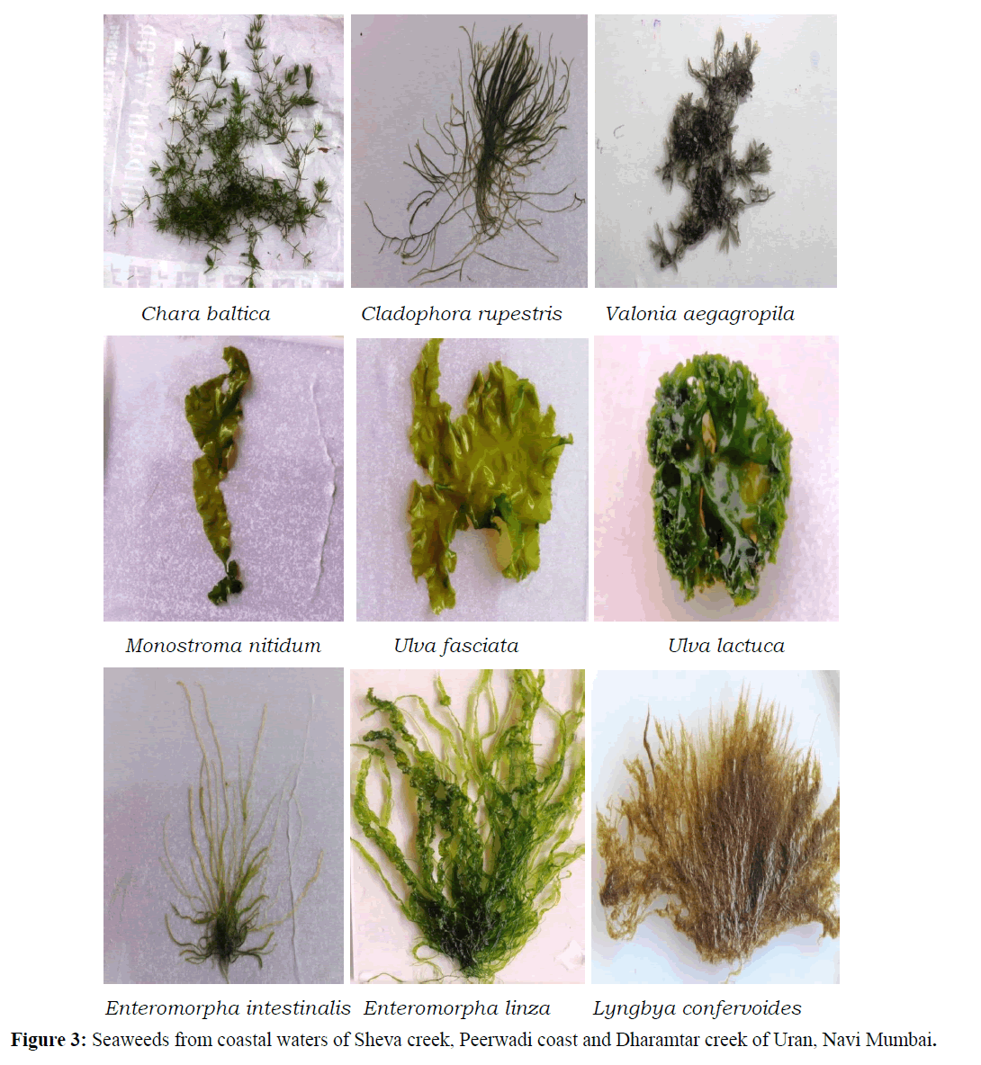 Pure-Applied-Zoology-Seaweeds-coastal