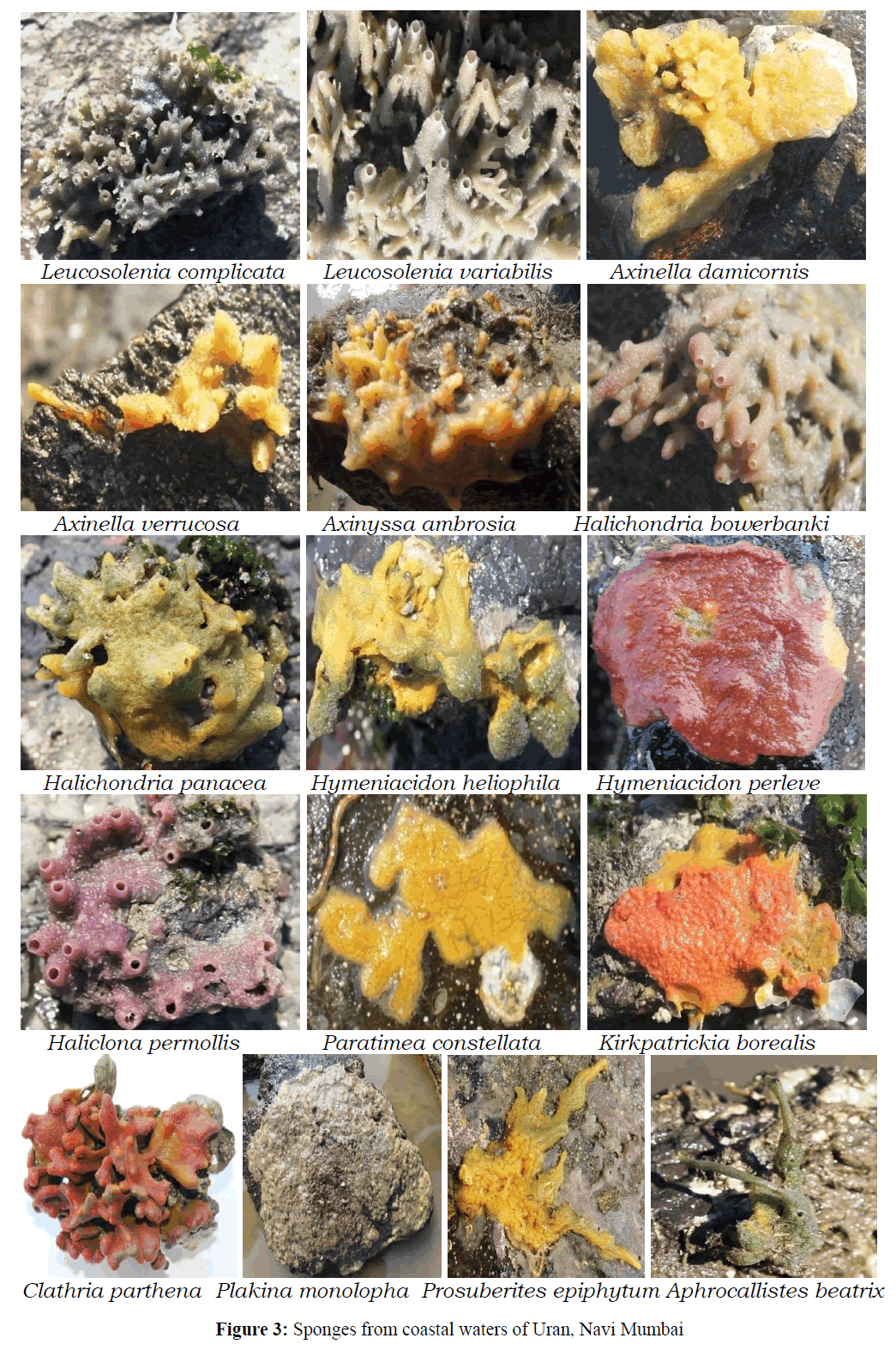 Pure-Applied-Zoology-Sponges-coastal