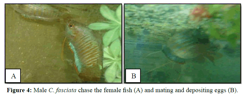 Pure-Applied-Zoology-mating-depositing