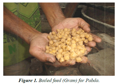 agricultural-science-botany-Boiled-feed