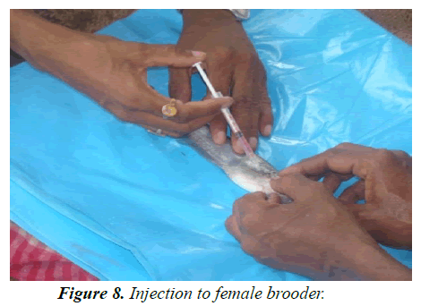 agricultural-science-botany-Injection-female