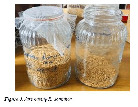 agricultural-science-botany-Jars
