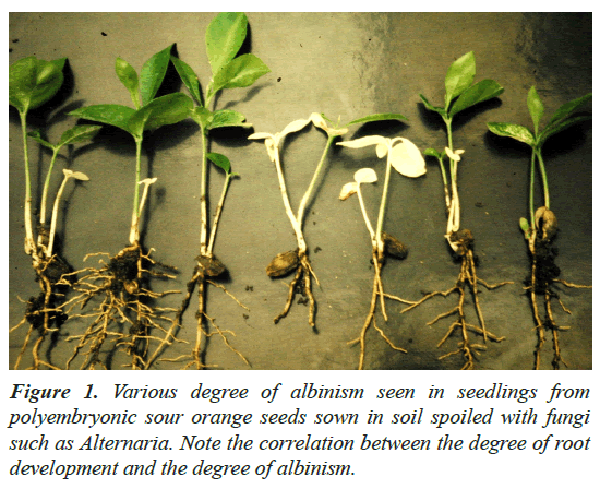 agricultural-science-botany-albinism-seen
