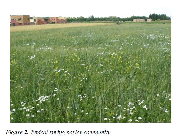 agricultural-science-botany-barley-community