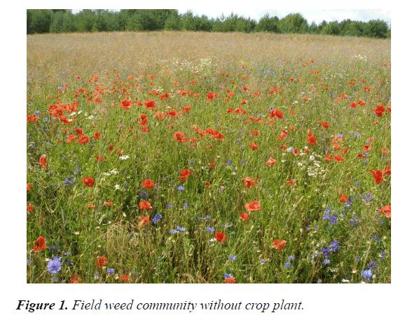 agricultural-science-botany-crop-plant