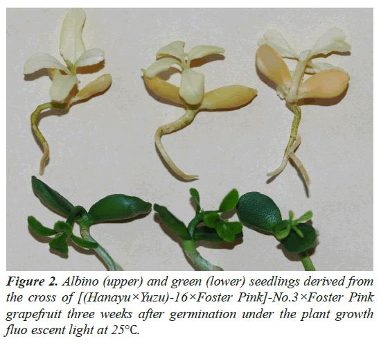 agricultural-science-botany-germination-under