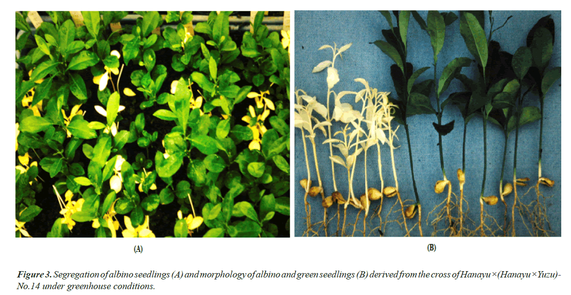 agricultural-science-botany-green-seedlings