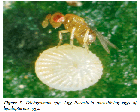 agricultural-science-botany-parasitizing-eggs