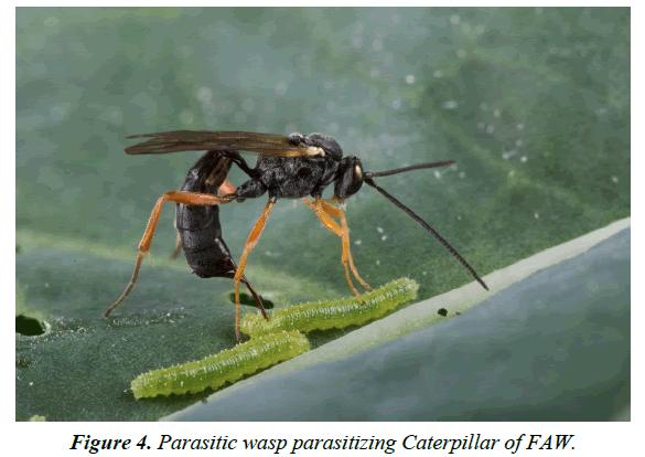 agricultural-science-botany-wasp-parasitizing