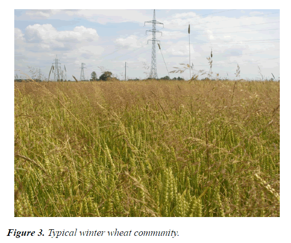 agricultural-science-botany-wheat-community