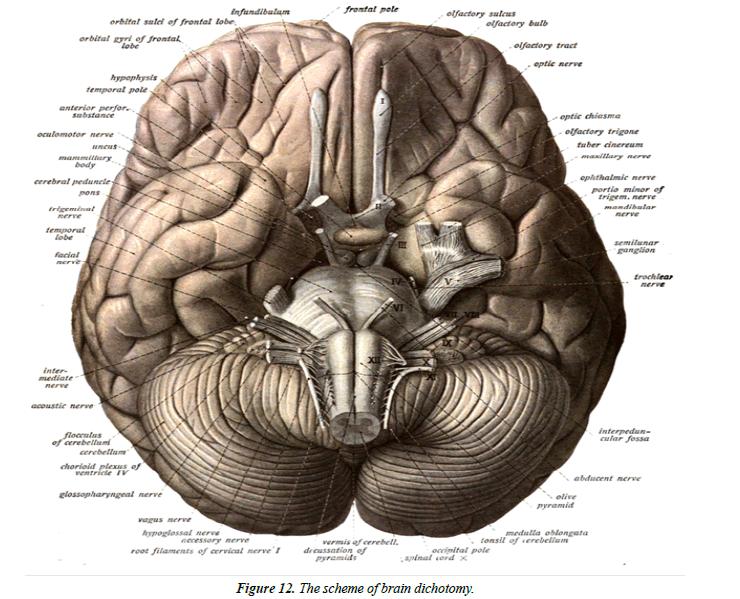 applied-mathematics-statistical-applications-brain