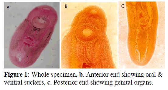 applied-zoology-genital-organs
