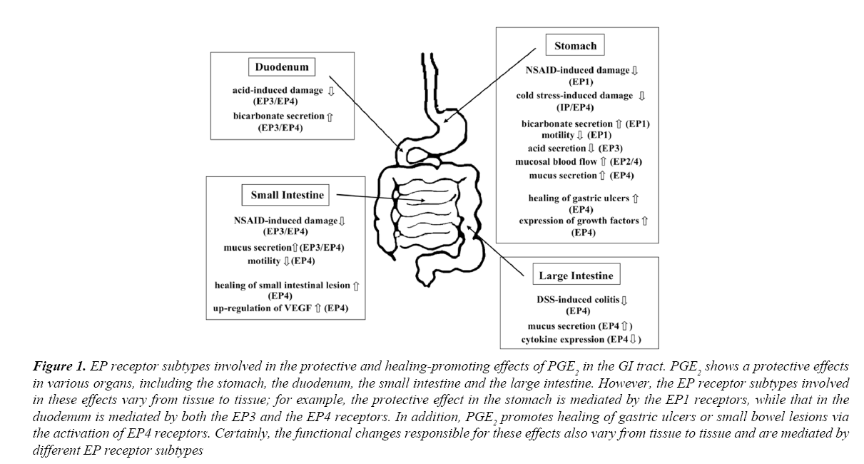 archives-digestive-disorders-duodenum