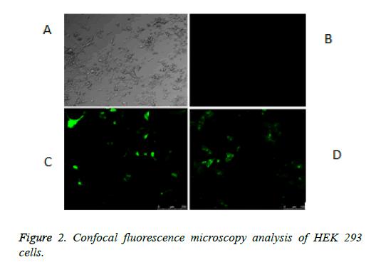 biochemistry-biotechnology-fluorescence