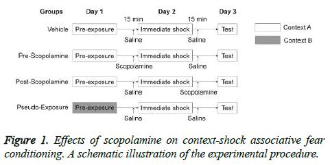 biochemistry-biotechnology-scopolamine