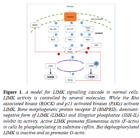 biochemistry-biotechnology-signalling-cascade