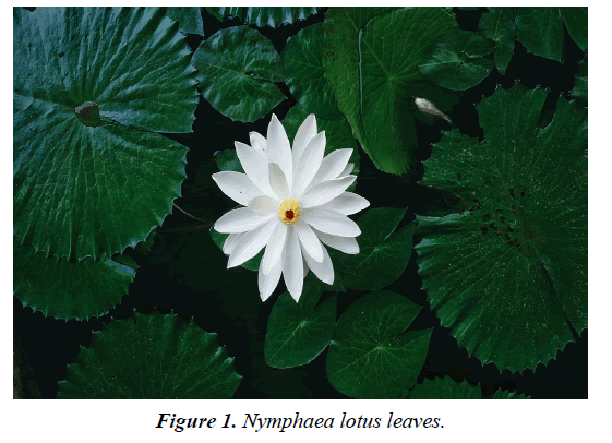 biology-medicine-case-report-lotus-leaves