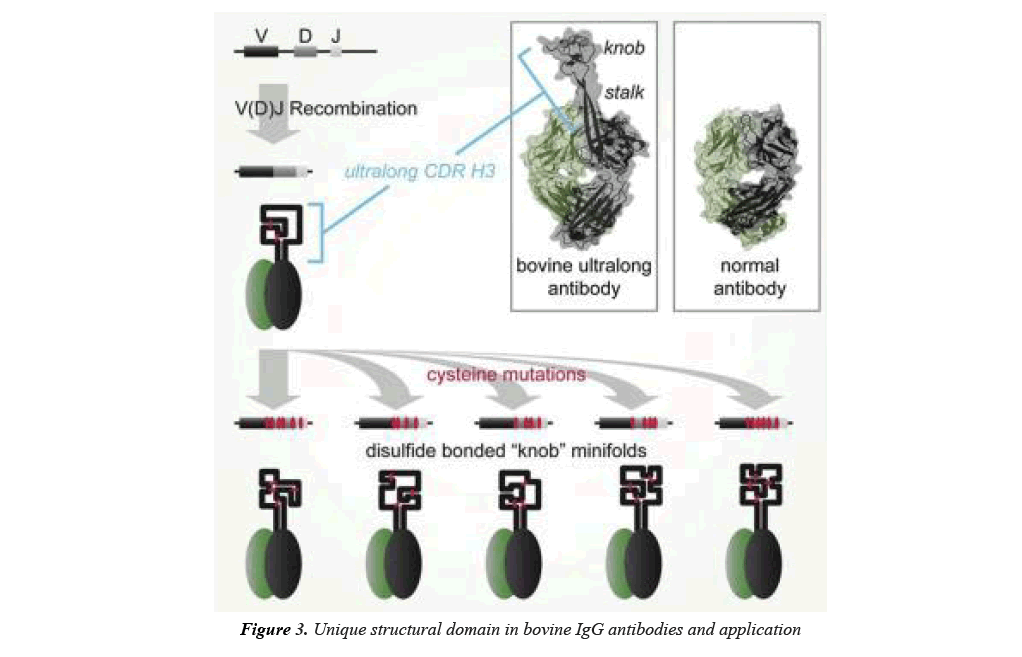 biomedical-imaging-IgG-antibodies