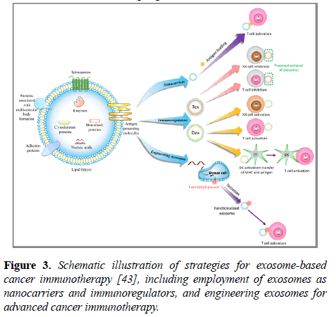 cancer-immunology-therapy-engineering-exosomes
