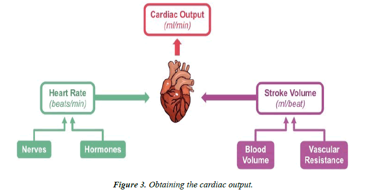 cardiovascular-medicine-therapeutics-cardiac