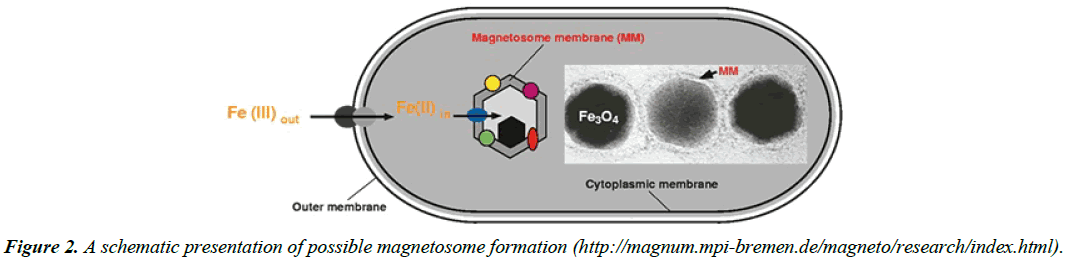 chemical-technology-applications-possible-magnetosome