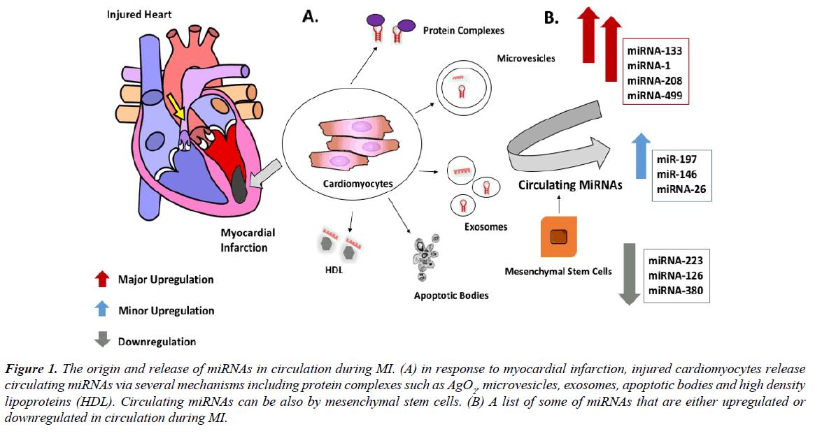 cholesterol-heart-disease-stem-cells