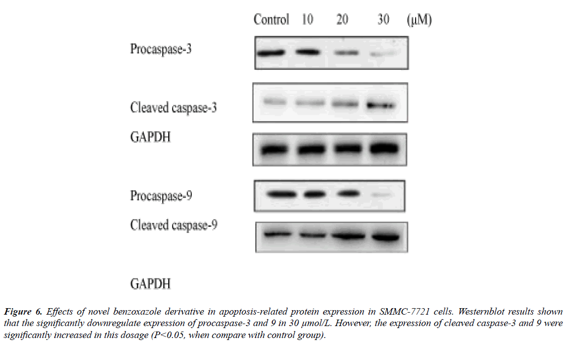 clinical-experimental-apoptosis-related-protein