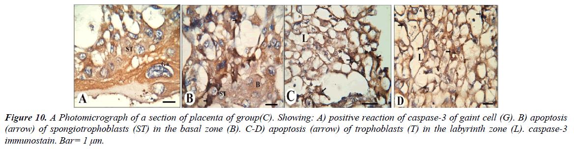 clinical-experimental-toxicology-apoptosis