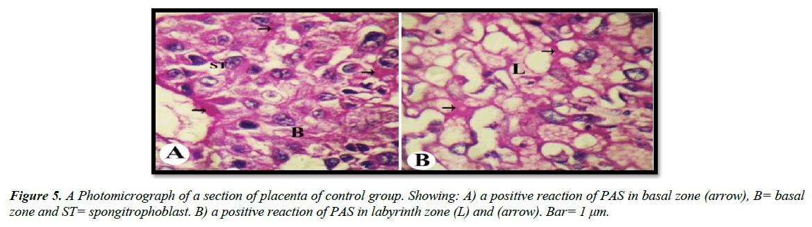 clinical-experimental-toxicology-spongitrophoblast