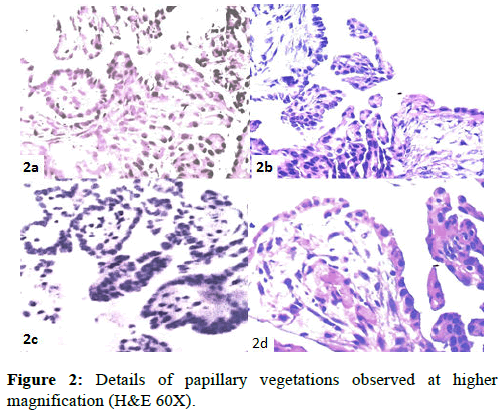 clinical-pathology-higher-magnification