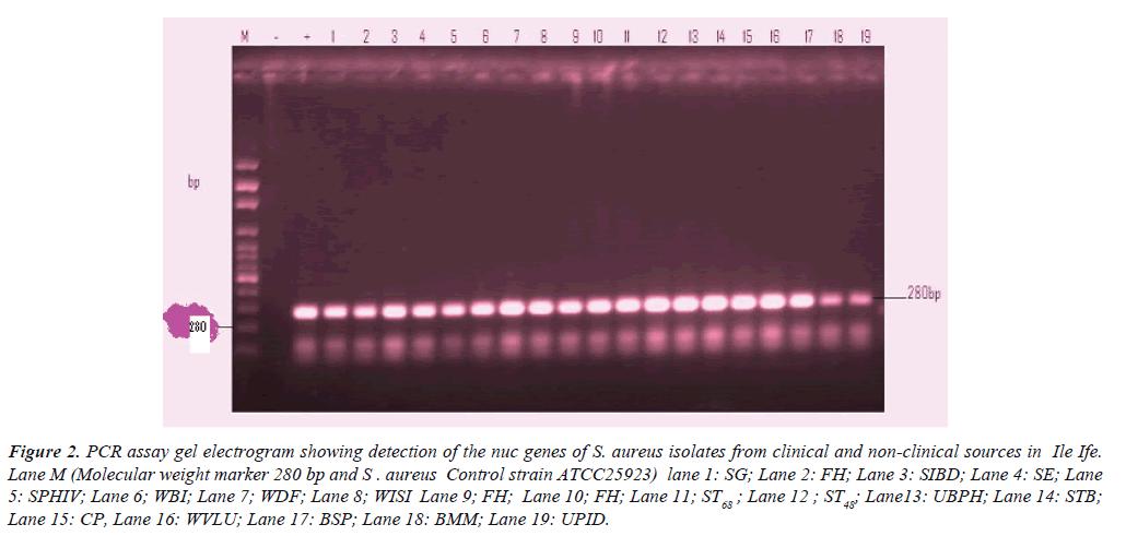 clinical-pathology-laboratory-medicine-PCR-assay-gel-electrogram
