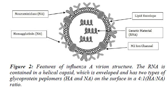 clinical-vaccine-research-influenza