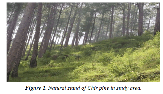 environmental-risk-assessment-Chir-pine-study-area