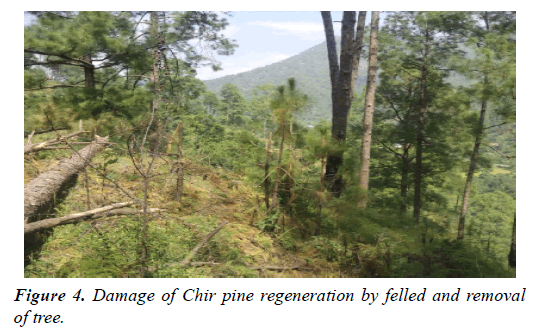 environmental-risk-assessment-Damage-Chir-pine