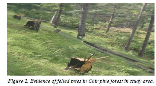 environmental-risk-assessment-Evidence-felled-trees
