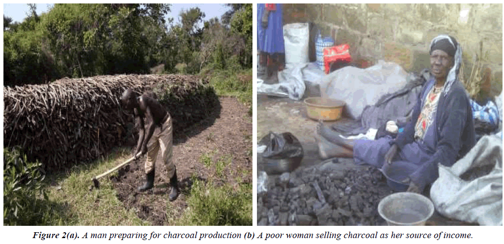 environmental-risk-assessment-charcoal-production