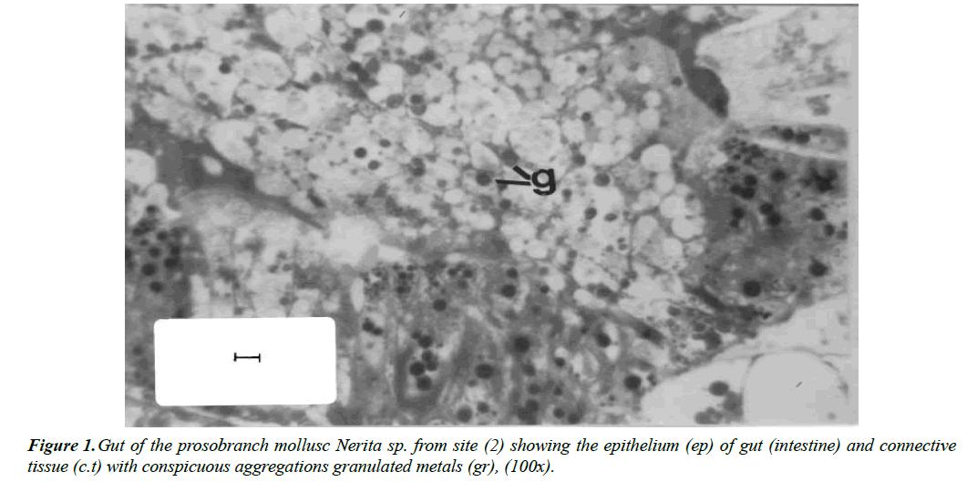 environmental-risk-assessment-prosobranch-mollusc-Nerita