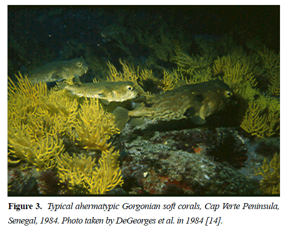 fisheries-research-Gorgonian-soft