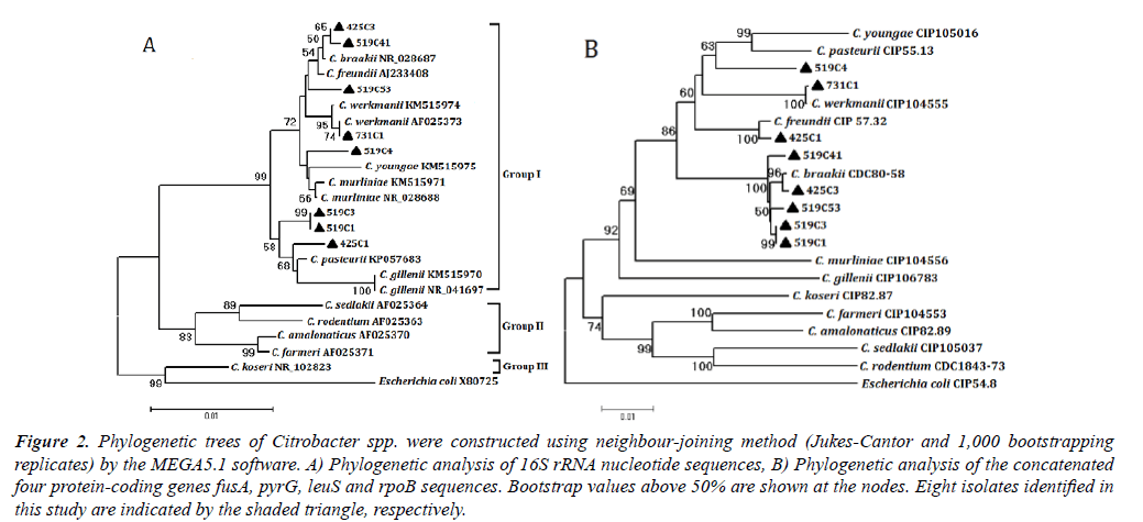 fisheries-research-Phylogenetic-trees