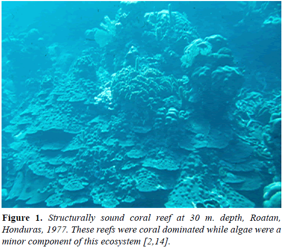 fisheries-research-coral-reef
