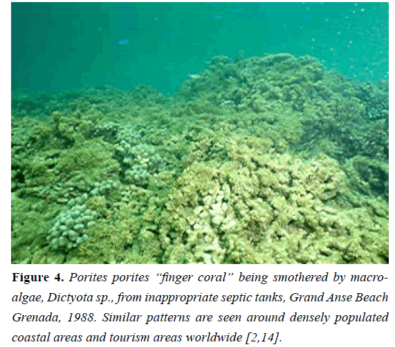 fisheries-research-finger-coral