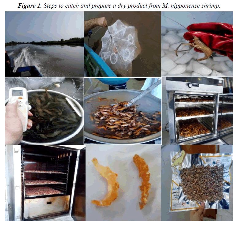 fisheries-research-nipponense-shrimp